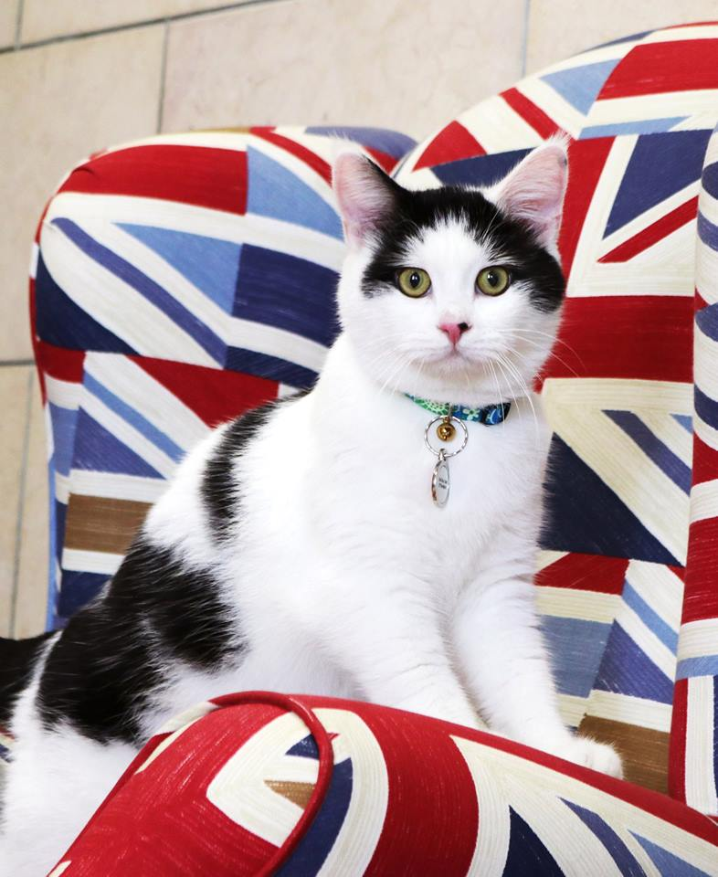 Posing for his first official portrait (British Embassy Jordan Facebook)